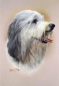 Bearded Collie Head Study Print RMDH16
